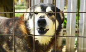 Dog Bites: Cleveland Attorney